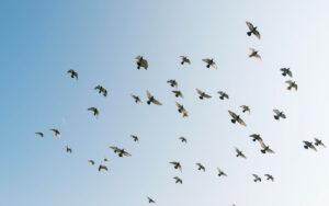 Sunny day flying birds